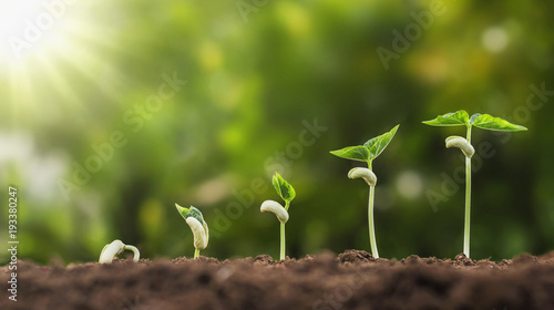Fotografia concept agriculture planting seeding growing step in garden with sunshine