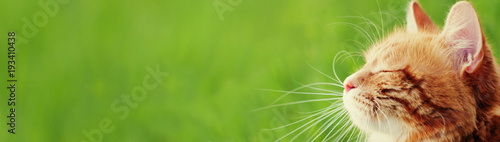 Banner with cat - web header template - website simple design