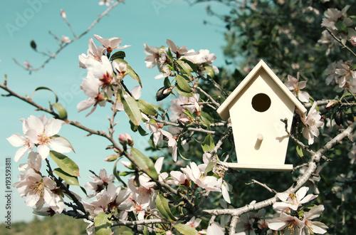 Fotografija Little birdhouse in spring over blossom cherry tree.