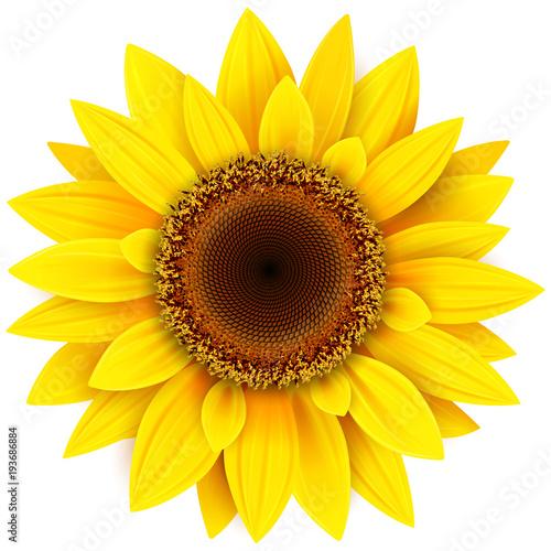 Fotografie, Obraz Sunflower flower isolated