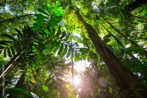 Canvas Print Jungle in Costa Rica