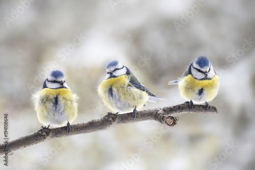 Fototapeta premium Ptaki na gałęzi
