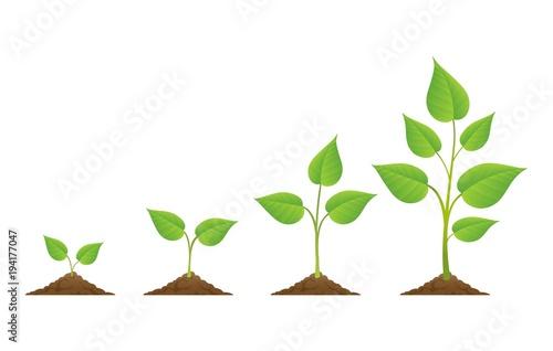 Valokuvatapetti Planting