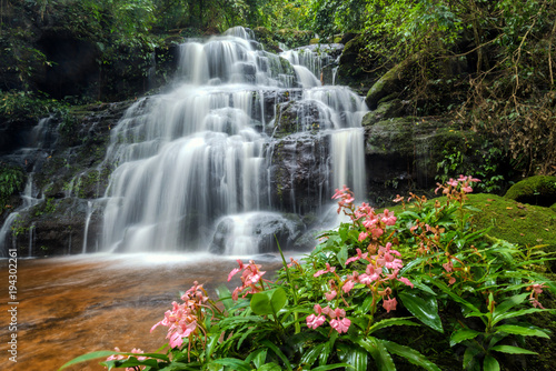 beautiful waterfall with pink snapdragon flower in foreground , Mun dang waterfall , Pisanulok , Thailand