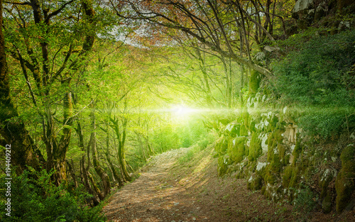 Photo Bright light and footpath in green forest