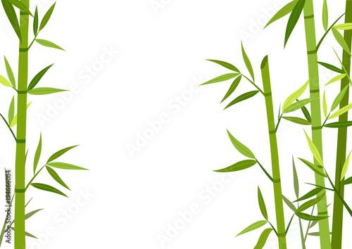 Slika na platnu Green bamboo background