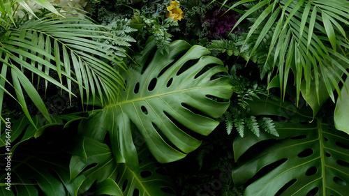 Fotografiet Green tropical leaves Monstera, palm, fern and ornamental plants backdrop backgr