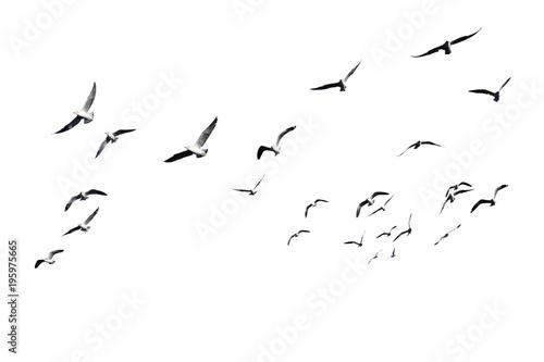 Photo Flock of birds flying isolated on white background