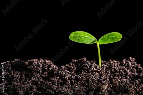 Vászonkép Sprout.