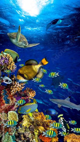colorful wide underwater coral reef 16to9 vertical background smartphone wallpaper with many fishes turtle and marine life / Unterwasser Korallenriff Hintergrund vertikal hochformat 16zu9