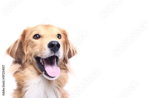 Fotografia Beautiful dog