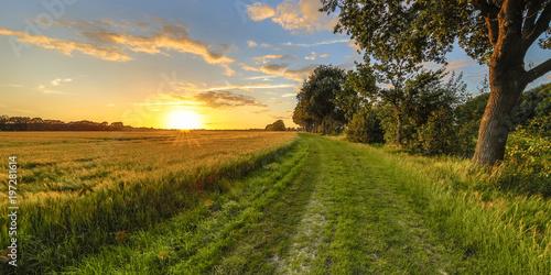 Tablou Canvas Wheat field along old oak track