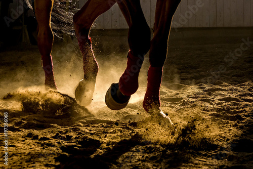 Fotografiet Detail of a horse training inside a horseback riding school in Romania, dust and