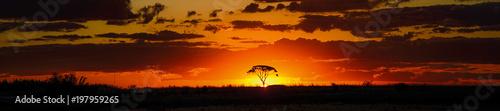 Obraz na plátně savannah sunset behind tree orange sky