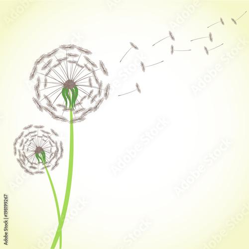 Lata dandelion z wiatrowymi podmuchowymi latanie ziarnami odizolowywającymi na białym tle. Okwitnięcie kwiatu rośliny wektoru zapasu puszysta ilustracja