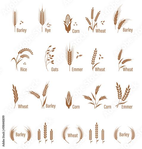 Slika na platnu Agricultural symbols isolated on white background.