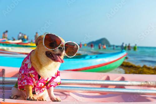 Obraz na plátně Cute chihuahua dog