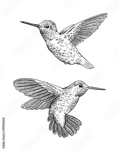 Fotografia Set of 2 hand drawn hummingbirds on white background