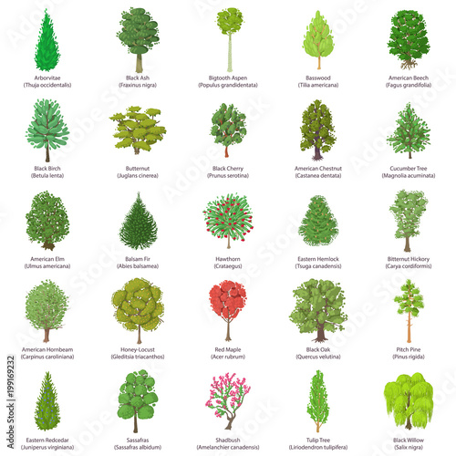 Tree types icons set, isometric style Fototapeta