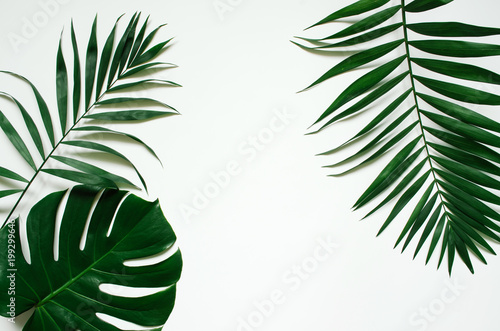 Green flat lay tropical palm leaf branches on white background. Room for text, copy, lettering.