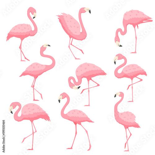 Fototapeta premium Ilustracja kreskówka wektor różowy flaming