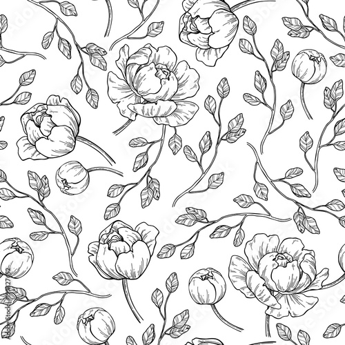 Fototapeta Peony flower seamless pattern drawing. Vector hand drawn engrave