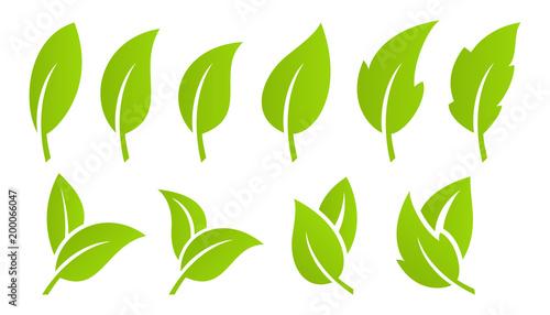Canvas Print Green leaf set. Eco