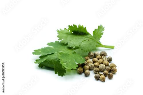 koriander korianderfrüchte isoliert freigestellt auf weißen Hintergrund, Freisteller