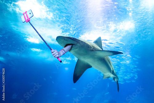Fototapeta premium Podwodny rekin biały robiący selfie z ludzką ręką trzymającą kij do selfie. Podwodne morskie śmieszne tło.