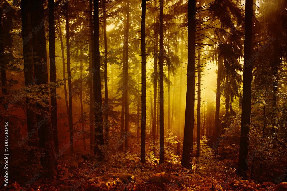 Magicznego ranek pomarańczowej czerwieni lasu krajobrazowy barwiony mgłowy drzewo. <span>plik: #200228043   autor: robsonphoto</span>