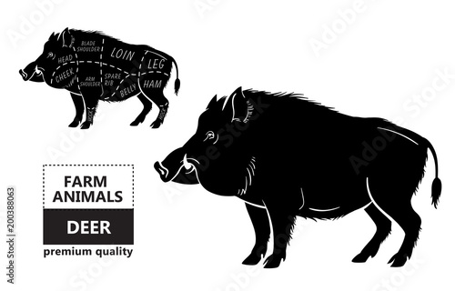 Fototapeta Wild hog, boar game meat cut diagram scheme - elements set on chalkboard