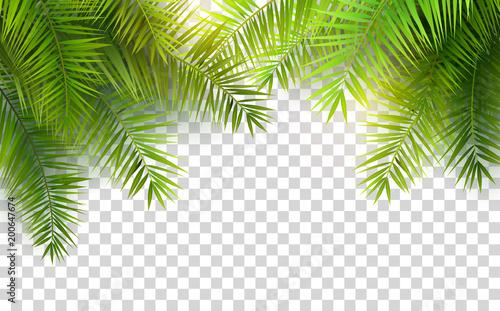 Fotografia Summer palm leaves