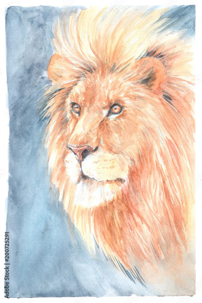Szkic głowy lwa, akwarela <span>plik: #200725291   autor: vensk</span>