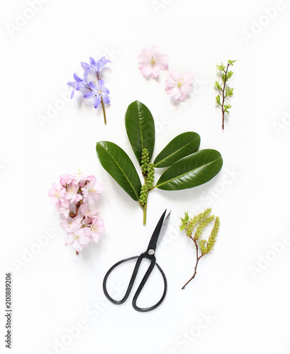 Spring botanical floral composition. Pink Japanese cherry blossoms, blue scilla flowers and evergreen English laurel branch with black vintage scissors on white wooden background. Styled stock photo