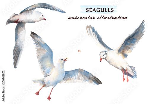 Fototapeta premium Piękna mewa latająca na niebie. Akwarela ilustracja na białym tle na białym tle.