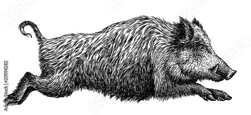 Fotografia, Obraz black and white engrave isolated pig illustration