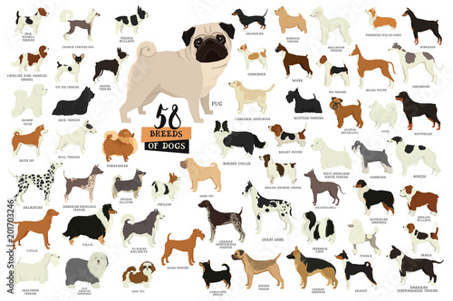 Fényképezés 58 Breeds of dogs Isolated objects
