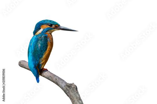 Fotografie, Obraz Colorful tiny bird