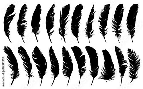 Fotografiet Feathers of birds.