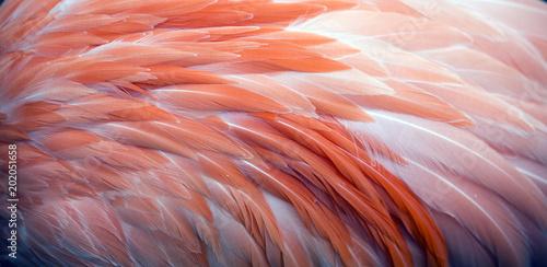 Fotografia, Obraz Close up view of pink flamingo feathers