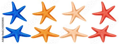 Obraz na plátně Set of colored starfish on a white background