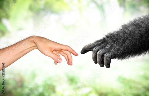 Fotografia Human and fake monkey hand evolution from primates concept