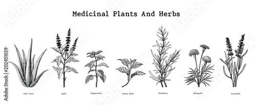 Tablou Canvas Medicinal plants and herbs hand drawing vintage engraving illustration
