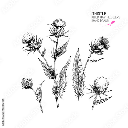 Valokuva Hand drawn wild hay flower