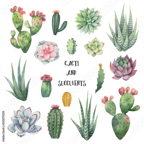 Leinwand Poster Watercolor vector set of cacti and succulent plants isolated on white background