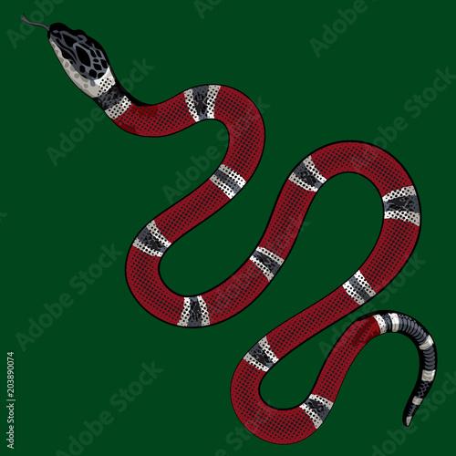 Fototapeta premium czerwony wąż wektor. Lampropeltis triangulum wektor. naklejka i ręcznie rysowane wąż do tatuażu. czerwony wąż gad na białym tle.