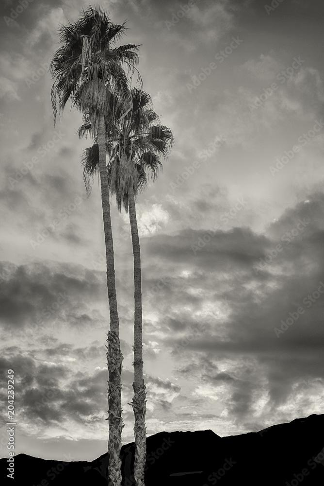 Oaza w Palm Springs <span>plik: #204239249   autor: Laurin Rinder</span>