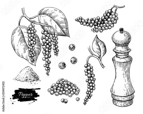 Stampa su Tela Black pepper vector drawing set