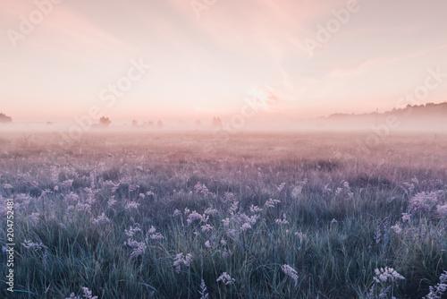 Obraz na płótnie sunrise field of blooming pink meadow flowers