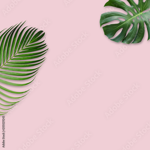 Green tropical leaves on pink background with copy space minimal design